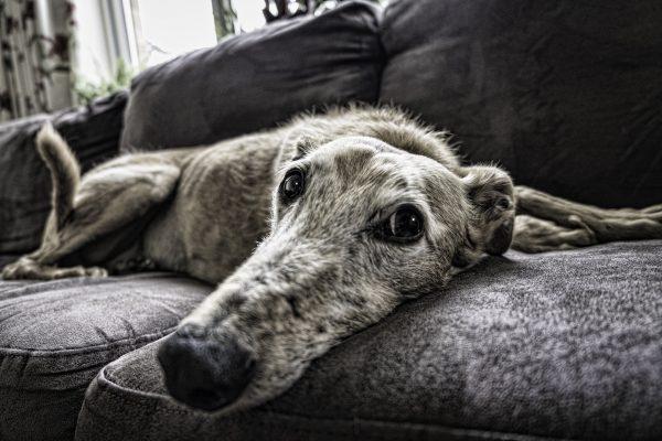 old-dog-2579885