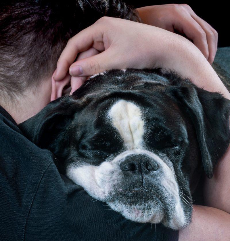 Hug A Dog Day: Dog Hugger Bronze Award Feature Photo. A man hugging his bull dog.