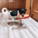 12 Quick Tips for a Fussy Dog's Changeover to Raw Feeding