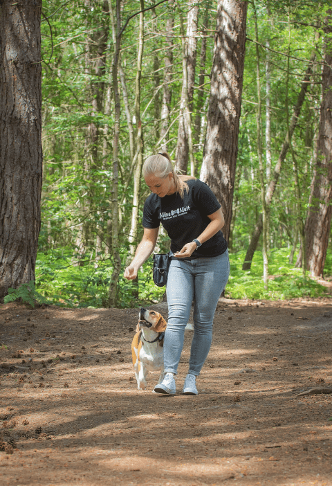 live with Milne & mutt dog training: scent training