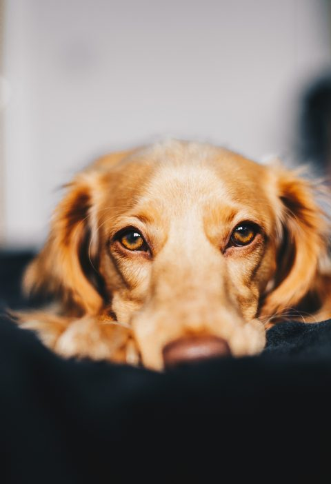 signs your dog may have a food allergy