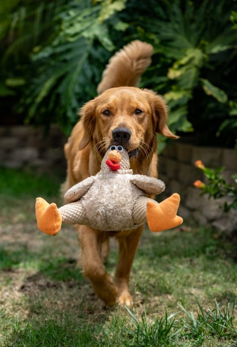 fun things to try with your dog: dog carrying toys